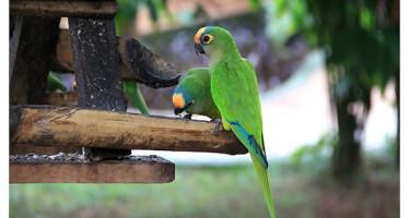 Bonito – Mato Grosso do Sul
